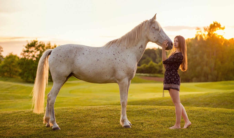 лошадь, sorgusuna, kayıtsız, indire, bilirsiniz, resimleri, uygun, siteden, ücretsiz,