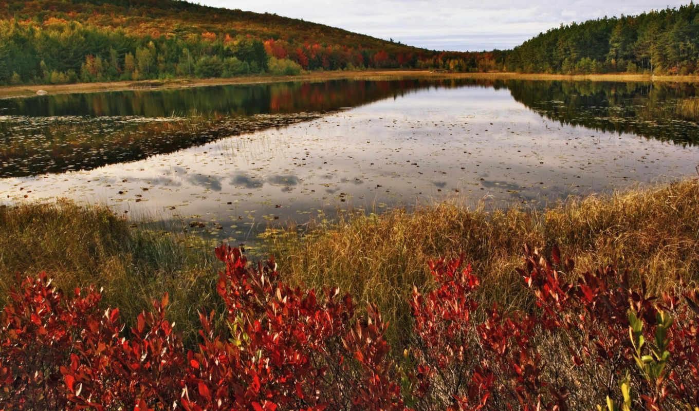 озеро, природа, pond, правой, осеннее, кнопкой, красные, views, кустики, landscape, water, autumn, лес,