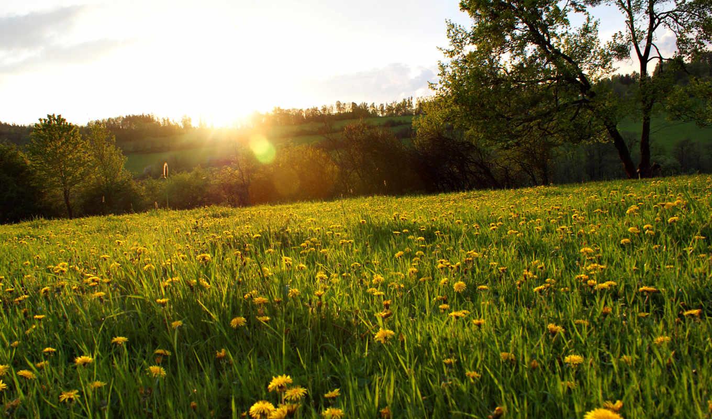 деревья, цветы, трава, лес, поляна, одуванчики, желтые, природа,