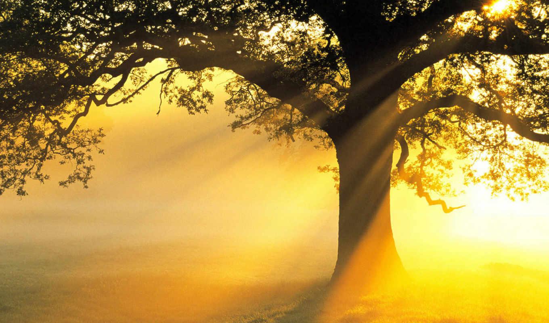 дерево, рассвет, солнце, лучи,