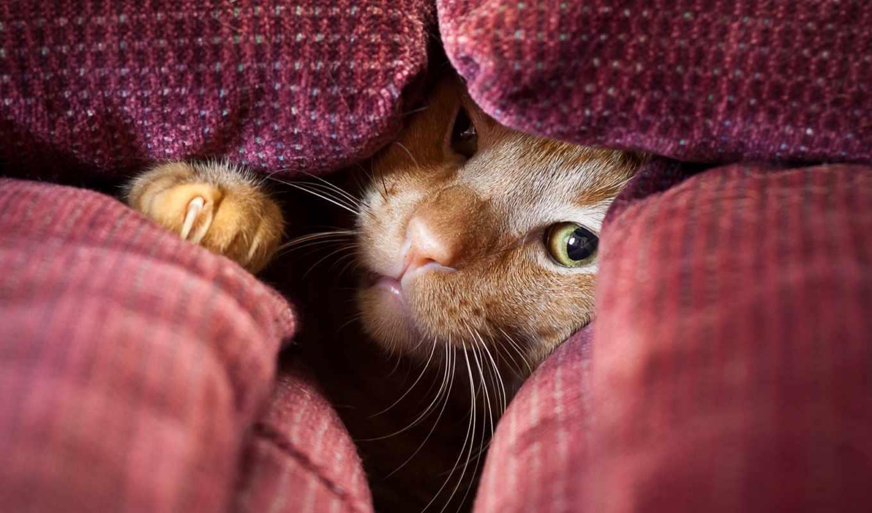 ,, кошка, small to medium-sized cats, усы, felidae, морда, нос,