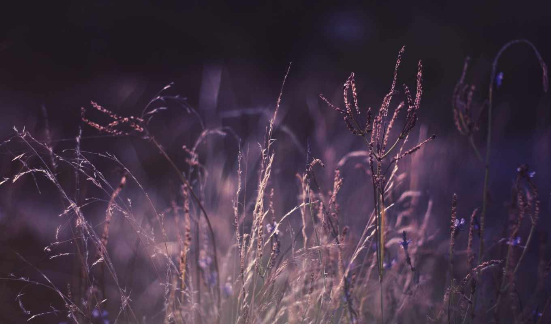 фиолетовый, color, растения, макро, природа,