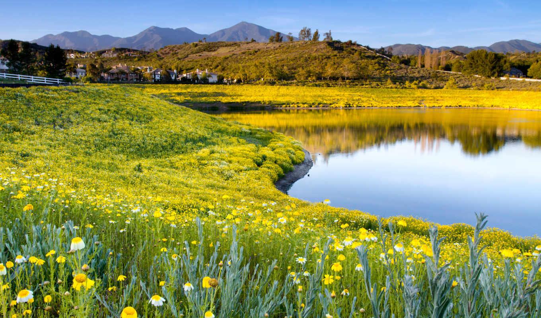 природа, summer, цветы, трава, озеро, небо,
