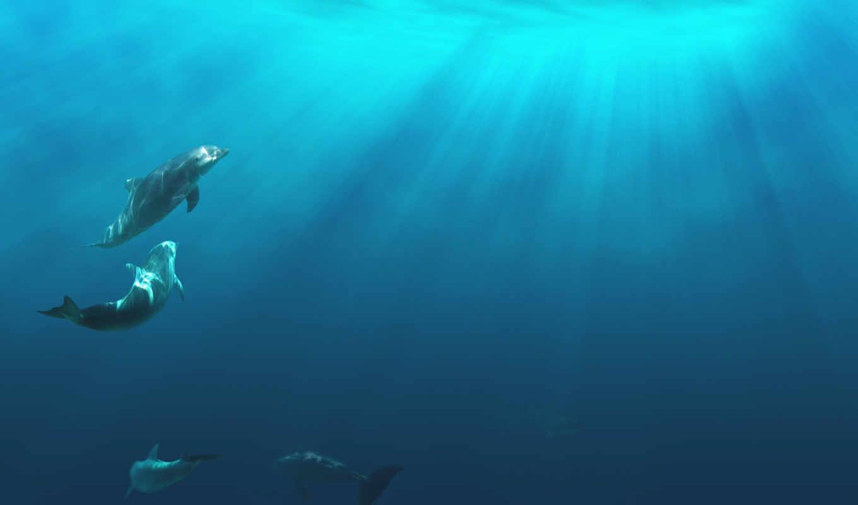 дельфины, играют, животные, underwater, воду, лучи, сквозь, свет, desktop, то, dolphins, amazing, умные, под, водой, dolphin,