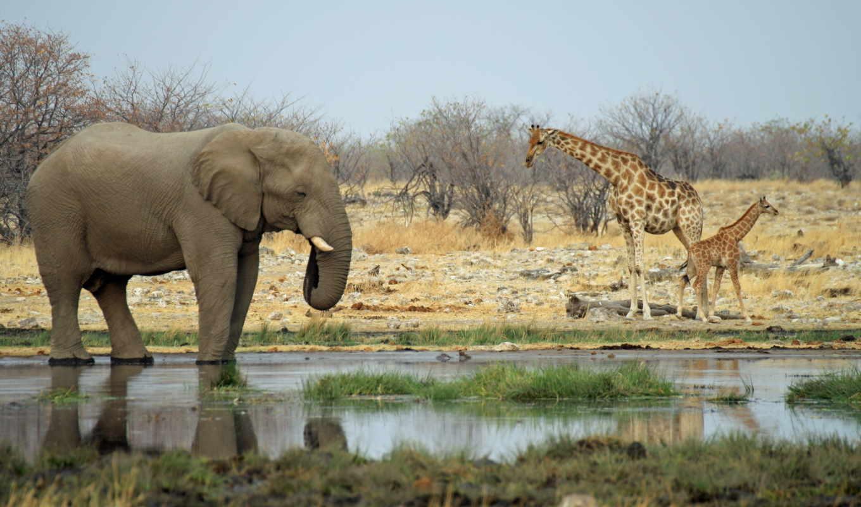 животные, африки, африка, животных,