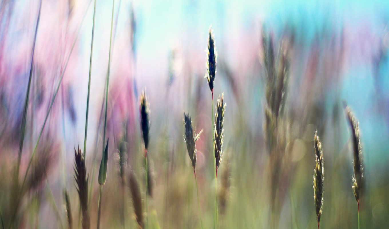 summer, поле, свет, трава, sun, rays, свежесть,