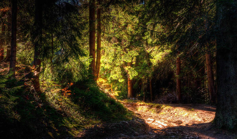 лес, широкоформатные, природа, утренний, wallpapers, густой, свет, деревья, водопады, light, forest,
