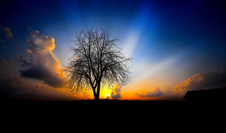 дерево, поле, они, небо,