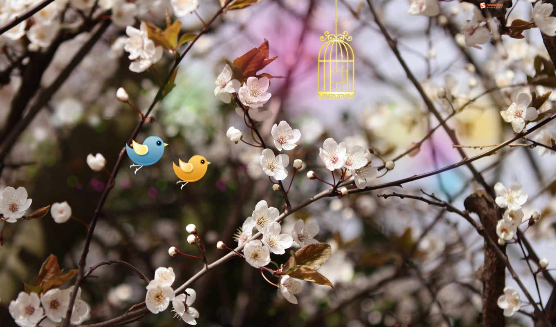 những, hành, cuộc, sống, vũ, hoa, loài, anh,