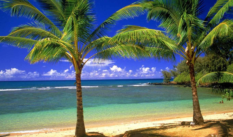 острова, гавайские, тихого, hawaii, части, остров, пляж, северной, океана, пальмы, море,