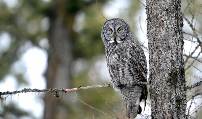 сова, природа, owls, ночь, zhivotnye, лес, images,
