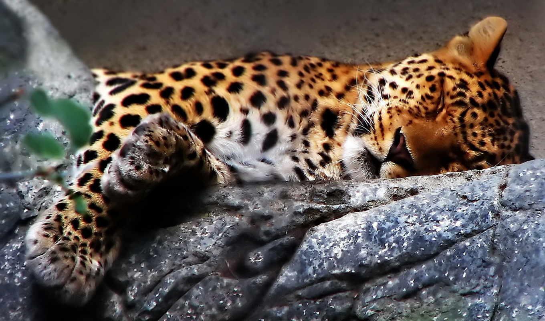 belize, zoo, страница, animes, felins, tigres, gifs, lions, animals, vous,