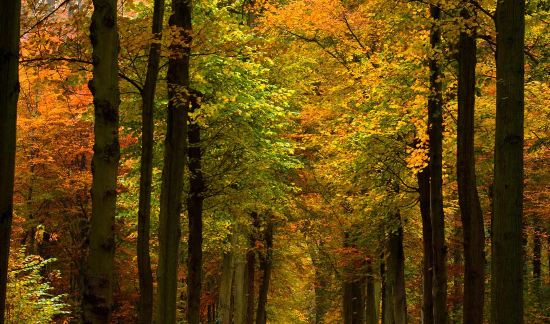 природа, леса, осенние, парки, деревья, осень,