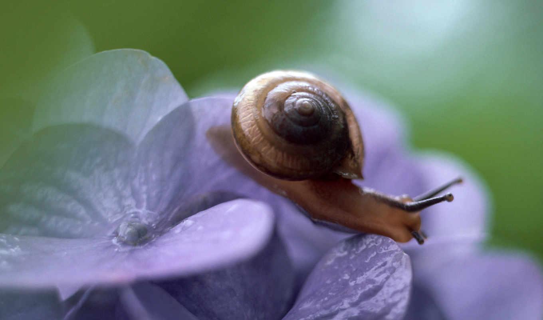 улитка, фиалки, макро, картинка, картинку, insect, free, best, цветке,