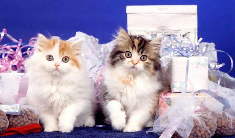 кошки, cats, gifts, bidibidi, nearer, кошками, desktop, galeri, часть, поделиться, изображения, вернуться, sweet, tapety, free, котенка, cat, два, подарках, pulpit,