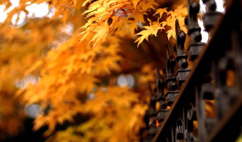 осень, листья, природа, решетка, ограда, картинка,