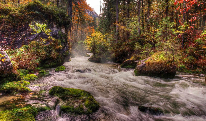 река, лес, мох, камни, поток, деревья, осень, hdr, austria, природа, картинка,