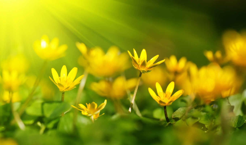 цветы, желтые, нечто, можно,