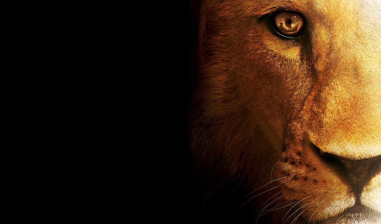 lion, кот, зверь, хищник,