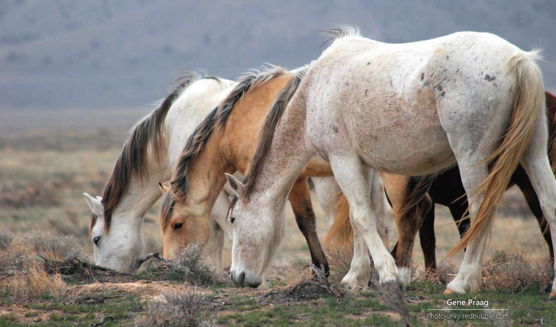 zhivotnye, домашние, atlar, лошади,