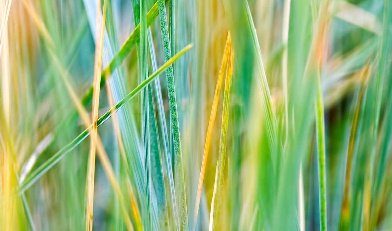 fondos, pantalla, hojas, fondo, verde, hierba, verdes, del, imágenes, las, rayas,