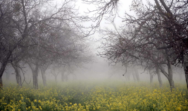 природа, рапс, деревья, цветы, желтые, растут, туман, осень,