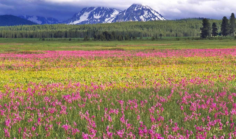 поле, цветы, салатовый, много, яркий, розовый, деревя,