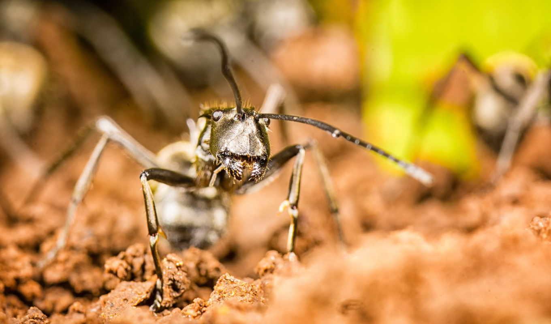 karınca, uludağ, sözlük,