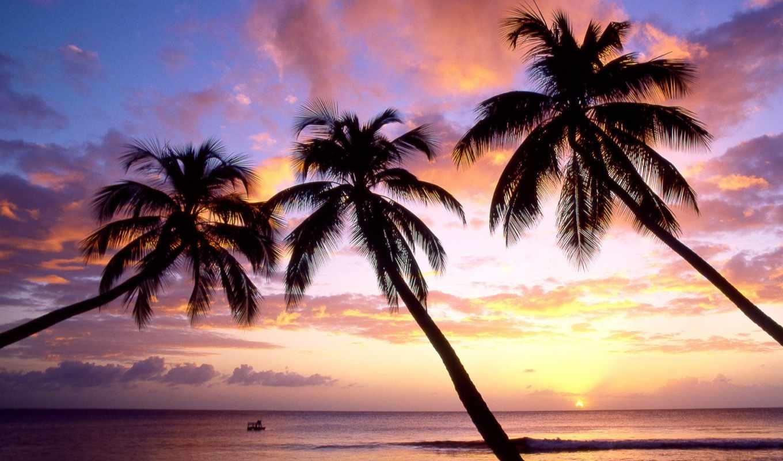 небо, пляж, free, palm, blue, summer,