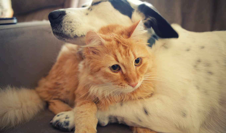 кот, собака, коты, друзья, собаки,