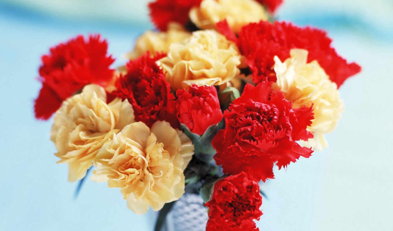 гвоздики, цветы, carnation,