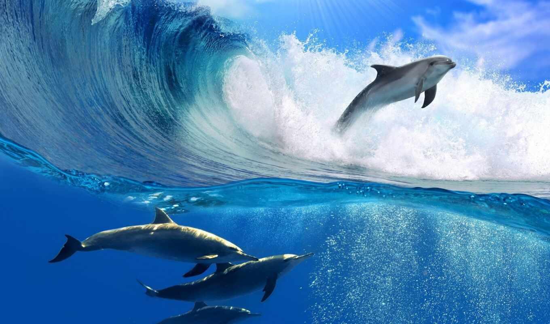 дельфины, качестве, хорошем, ocean, прыжок, красивые,