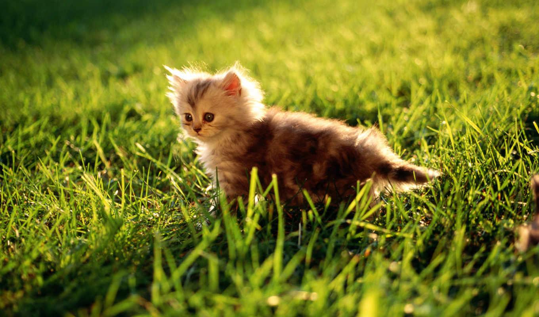 котенок, grass, samsung, galaxy, cute, thumbnail, траве, pack, desktop, животное, травке,