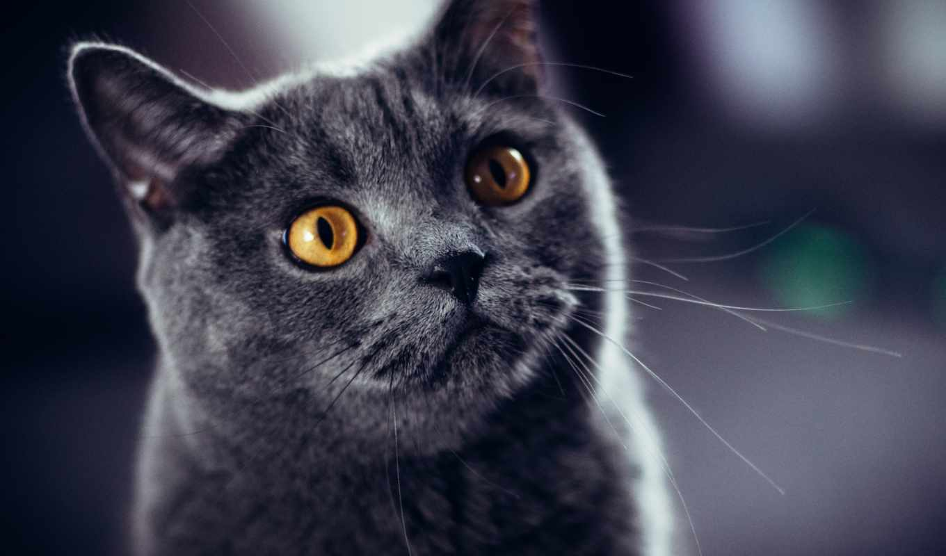 кот, flickr, pinterest, gato, pictures, pin, parede, papel,