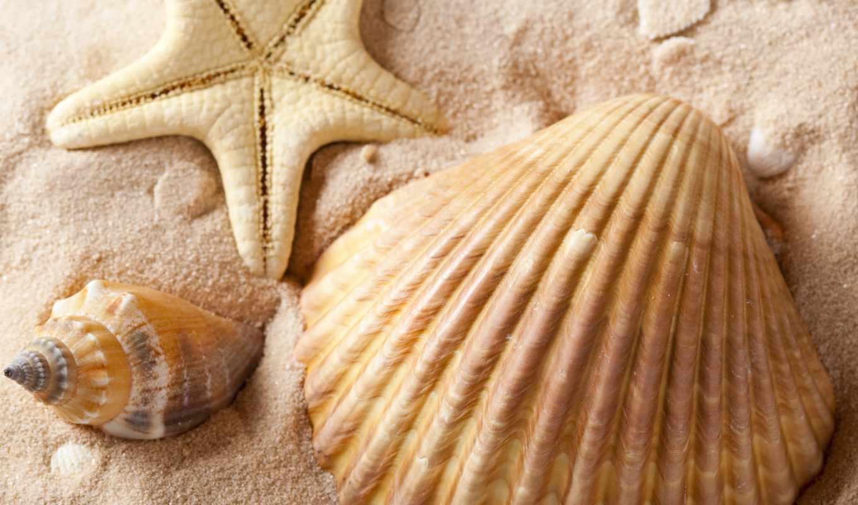 ракушки, star, морская, песок, море, морские, звезды, summer, пляж,