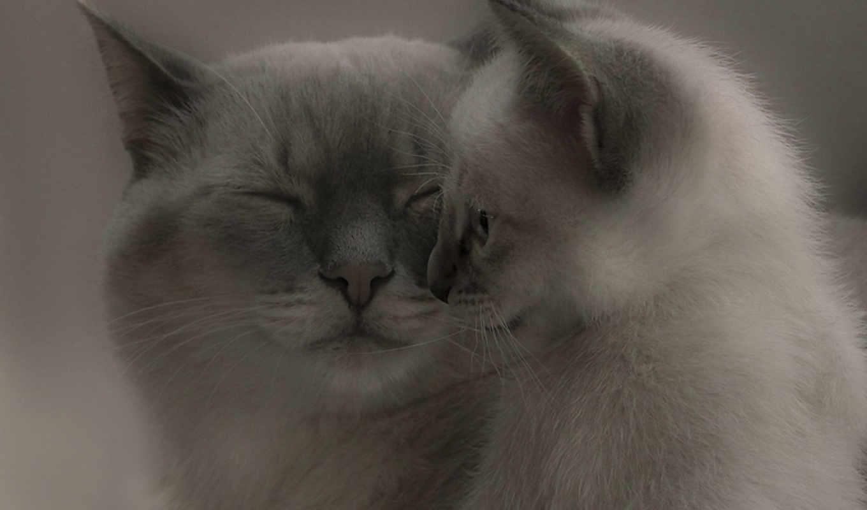 кот, за, котенок, free, usługi,