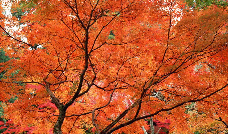 trees, original, nature,