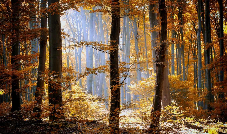 листья, осень, природа, оранжевые, лес, деревья, трава,