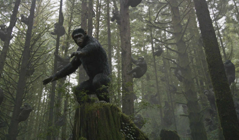 обезьян, революция, планета, macacos, content, после, фильма, смотреть,