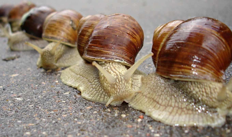 улитки, улиток, виноградных, snails, мемы, video, pack, виноградные,