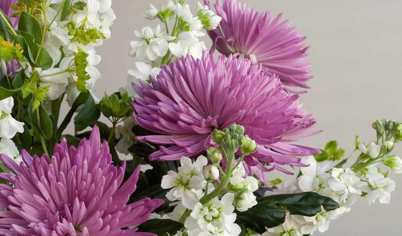 цветы, хризантемы, букеты,