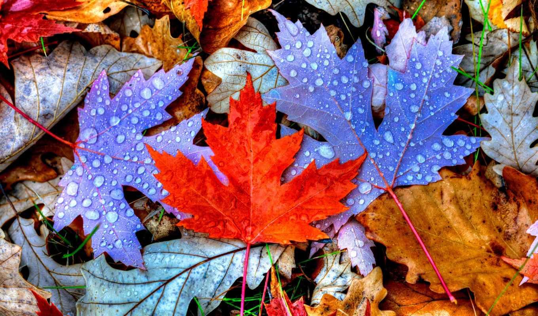 листья, you, фотопанно, осень, colorful, looking, resolution, фотообоев, беларуси, sale,