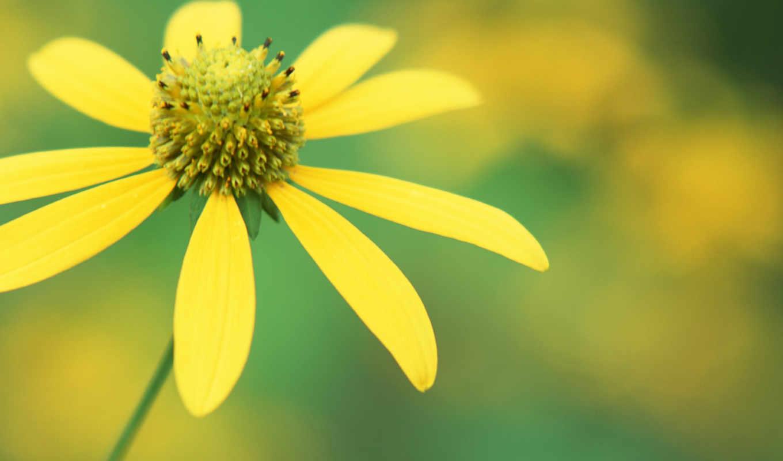 cvety, фотография, милых, вас, цветы, марта, подборка, priroda, девушек,