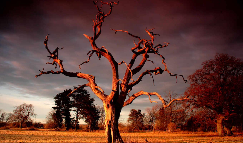 дерево, сухое, небо, девушка,