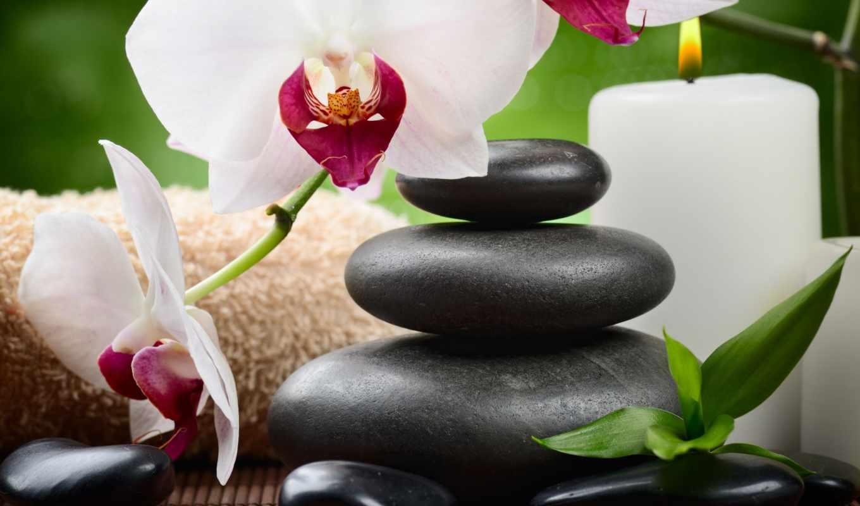камни, орхидея, спа, цветы, орхидеи,