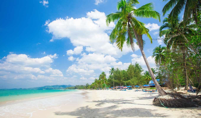 resort, пляж, море, palm, природа, tropical, uhd