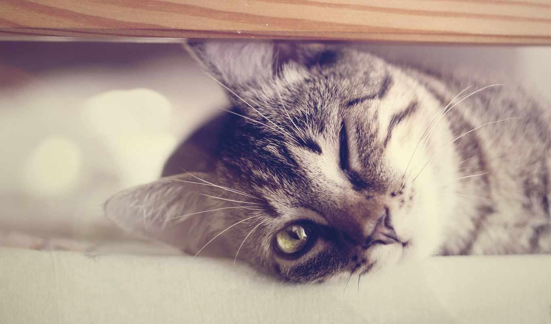 wallpaper, кот, cats, animals, tags, усы, рот, нос, глазом, котэ, одним, смотрит, мордочка, морда, animal, wallpapers, картинка, as,
