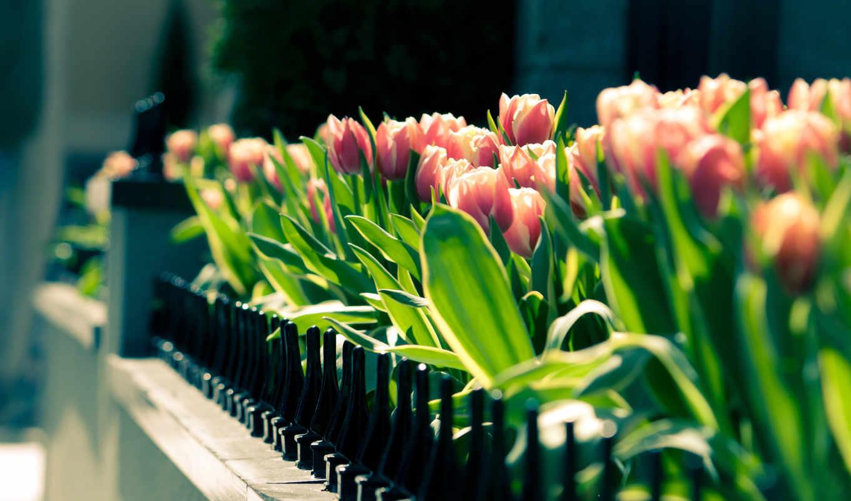 spring, gathering, тюльпаны, desktop, landscape, цветы, картинку, клумба,