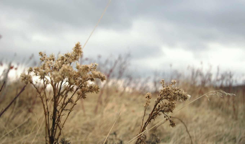 осень, трава, растение,