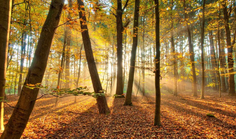 лес, природа, осень, деревья, свет,